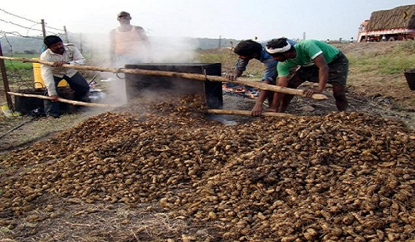 हळद शिजवल्यानंतर बांबू कढइच्या कड्यामध्ये अडकवून बाजूला करीता येतात