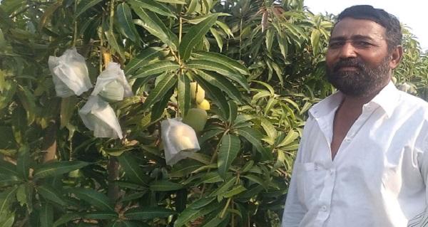 आपल्या आंबा बागेत शेतकरी श्री. परमानंद मल्लाप्पा गव्हाणे